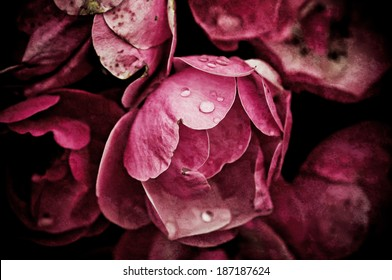 Pink peony flowers growing in the garden, grunge floral background