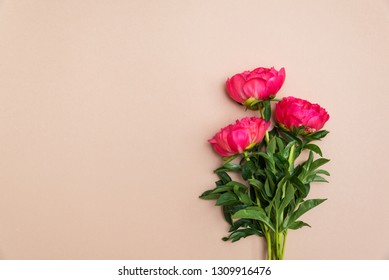pink peony flowers on a beige background with copy space