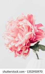 Pink Peony. Lifestyle image. Minimal home interior decoration. Poster image