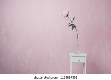 Pink peony stands on white vintage pedestal in a glass vase on a pink background. A minimalistic photo.
