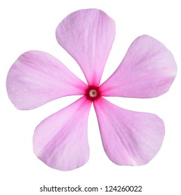 Pink Periwinkle Flower with Red Center - Madagascar Periwinkle - Vinca Minor  Isolated on White Background