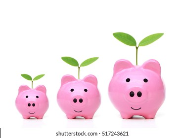 Pink piggy banks with small, medium, and large size with young trees - Green saving concept
