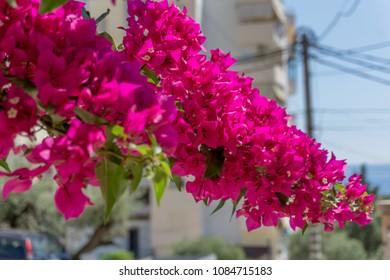 Pink Plant Closeup