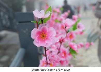Pink Plastic Sakura decorate in garden in Hongkong