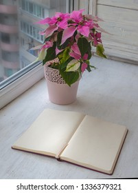 Pink poinsettia and notepad with blank pages. Concept plans for the New Year