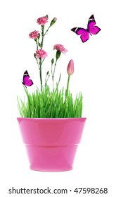 A pink pot with green grass and pink flowers and butterfly isolated on white background