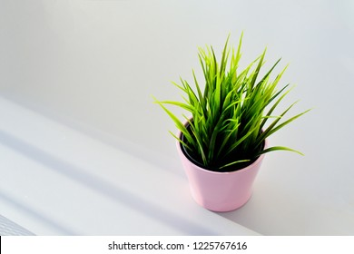Pink pot with green juicy grass on the office desk.