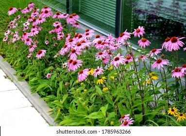 Parterre De Fleurs Images Photos Et Images Vectorielles De Stock Shutterstock