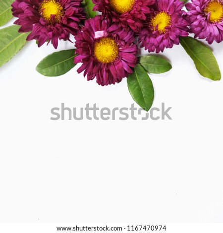 Pink Purple Aster Flower White Background Stock Photo Edit Now
