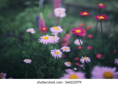 Pink and purple flower garden , top view - Shutterstock ID 564222979
