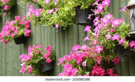 Pink and purple flowers in pot hang on green bamboo wall