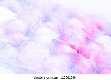 Pink and purple lampions