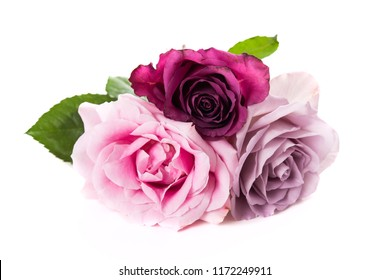 Pink and purple roses isolated on white background