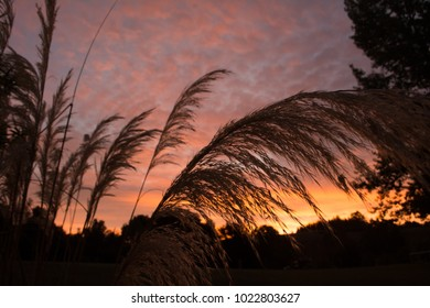 Pink and purple sunset silhouetting grass
