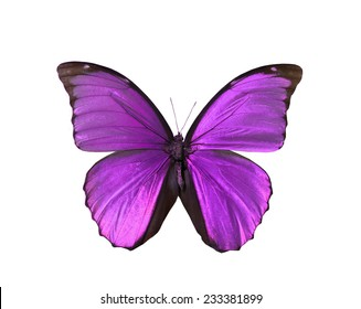 pink red butterfly isolated, set of realistic tropical butterflies , zoology,wild ,entomology, beautiful wing collection ,insect animal stuff icon