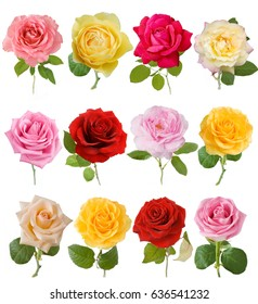 Pink, red, cream, yellow rose set isolated on white background