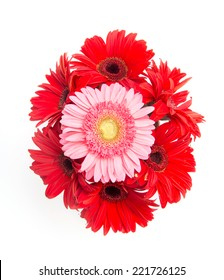 pink and red gerbera flower