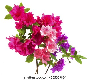 Pink, red, and purple azalea bouquet isolated on white.