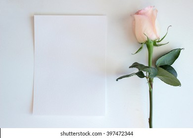 Pink Rose and blank paper, mockup.