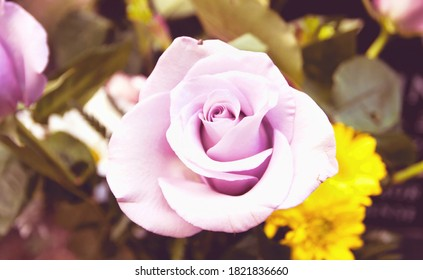 A pink rose in bloom in a bouquet.