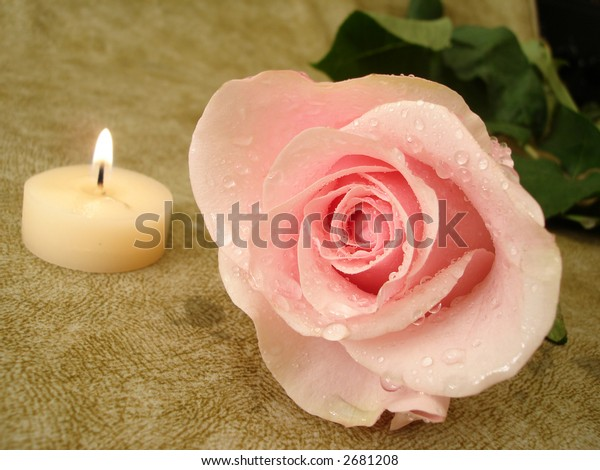 pink rose with candle on background