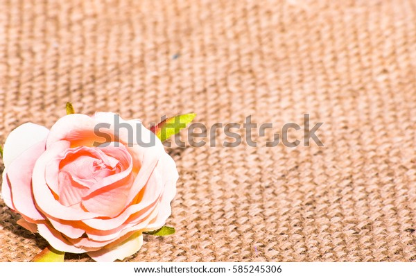 Pink rose, card for women's day, background with copy space