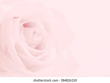 Pink rose close-up can use as wedding background. Soft blur focus. In sepia vintage pastel toned