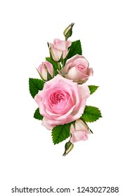 Pink rose flower and leaves in romantic arrangement isolated on white