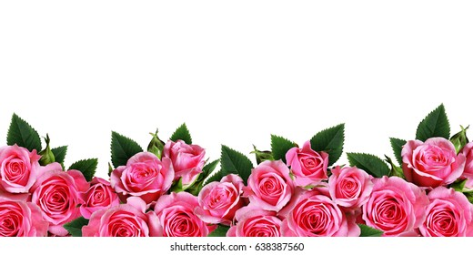 Pink rose flowers border isolated on white