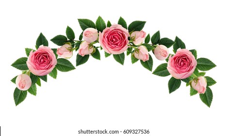Pink rose flowers and buds arch arrangement isolated on white. Flat lay, top view.