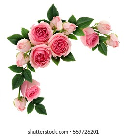 Pink rose flowers and buds circle arrangement isolated on white. Flat lay, top view.
