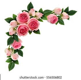 Pink rose flowers and buds corner arrangement isolated on white. Flat lay, top view.