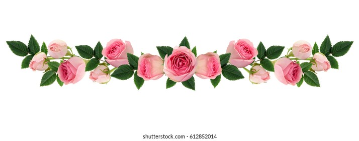 Pink rose flowers and buds line arrangement isolated on white. Flat lay, top view.