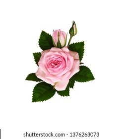 Pink rose flowers with green leaves in a floral  arrangement isolated on white background