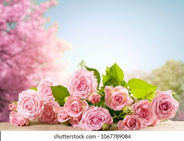 Pink rose flowers lying on sackcloth and spring trees with sakura blossoming branch against the blue sky