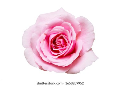 Pink rose isolated with clipping path on white background.