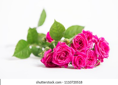 the pink rose isolated on a white background