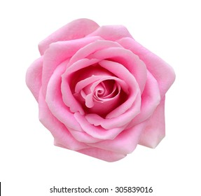 Pink rose isolated on white background. Deep focus.