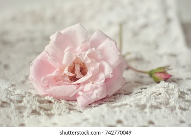 Pink rose on vintage fabric