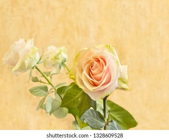 Pink rose on yellow background