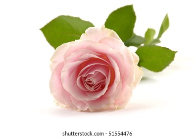 Pink rose over white