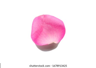 pink rose petal isolated on white