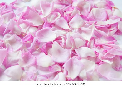 Pink flowers background images stock photos vectors shutterstock pink rose petals mightylinksfo