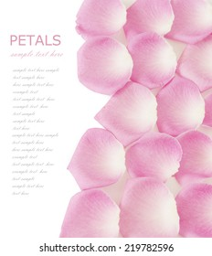 Pink rose petals background isolated on white with sample text