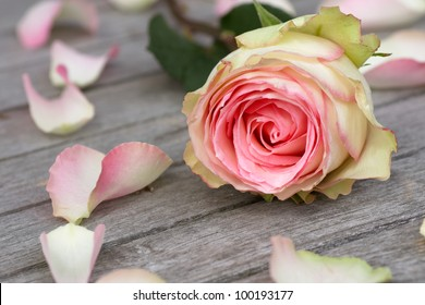 Pink Rose and Rose petals lying down on a wooden table