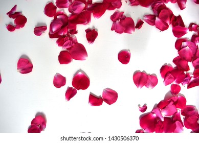 Pink rose petals on white background, background or texture for banners