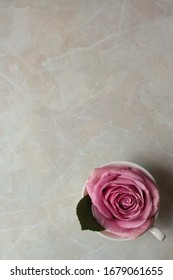 A pink rose in the tea cup on the marble background
