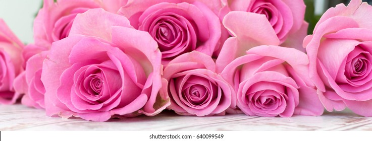 Pink roses banner