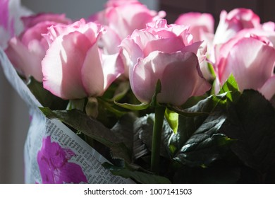 Pink roses bouquet in backlight