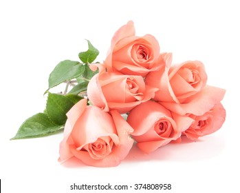 Pink roses bouquet in white background